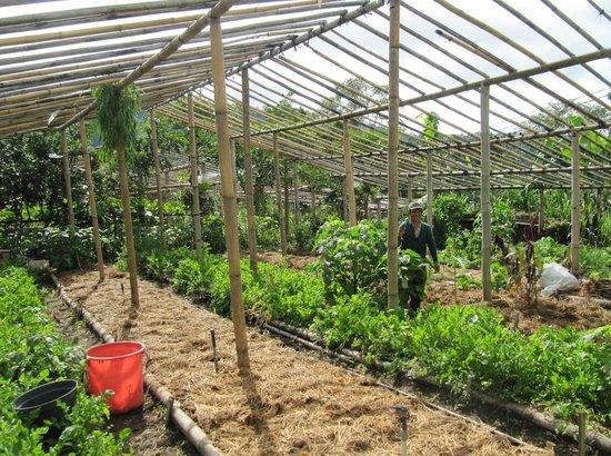 Bali Eco Village: Home garden