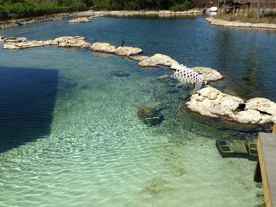 Florida Oceanographic Coastal Center: Turtlebay