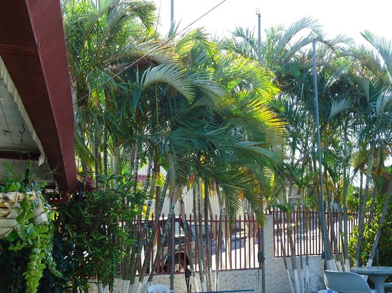 Riverside Hotel and Apartments : Palm trees lining the grounds of the Riverside Hotel