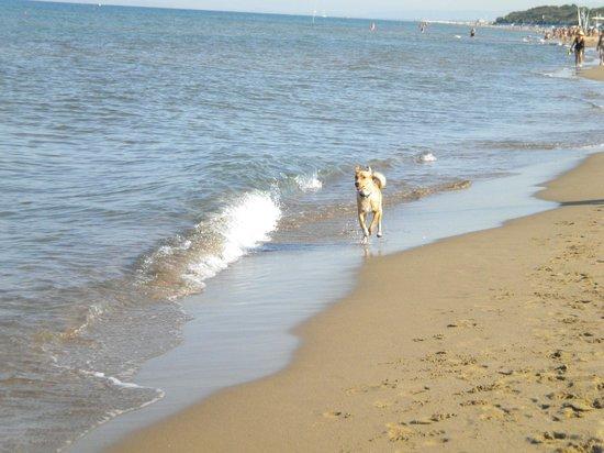 Dog Beach: Pixie corre libero e felice in spiaggia