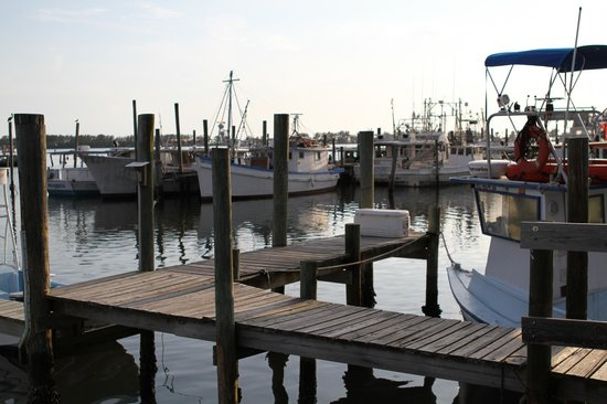 Star Fish Company Dockside Restaurant: View of the working fishing harbour