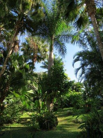 Barcelo San Jose: Hotel grounds