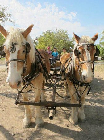 Rancho Cortez: Haywagon ride (they got to steer!)