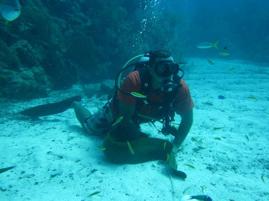 Scuba Sensations: Scuba Bert found a moray eel for us!