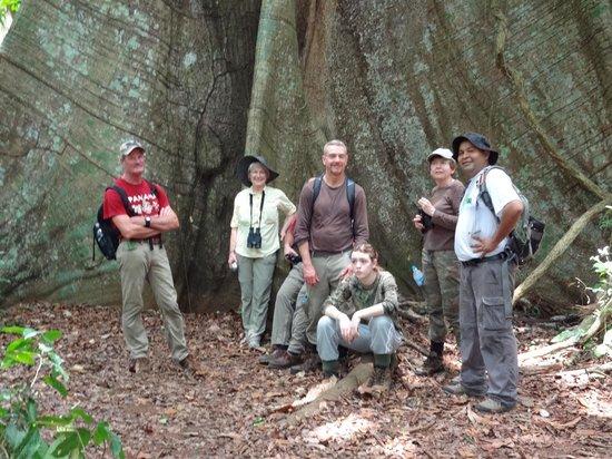 Barro Colorado Island: The island's Big Tree (Ceiba)