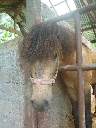 Munduk Moding Plantation: They have ponies!