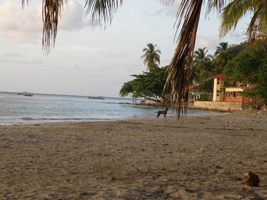 Hotel Restaurante Miss Elma : Along the beach