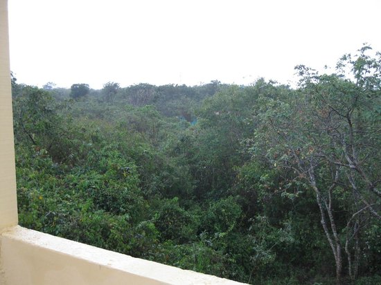 Dos Ojos Lodge: View of the jungle from the third floor.