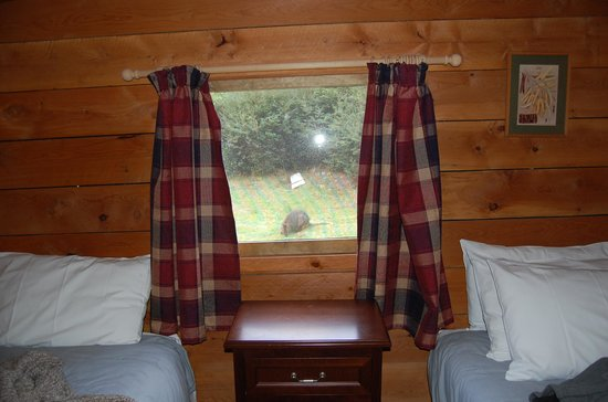 Corinna Wilderness Experience: Old Pub room wih Pademelon outside