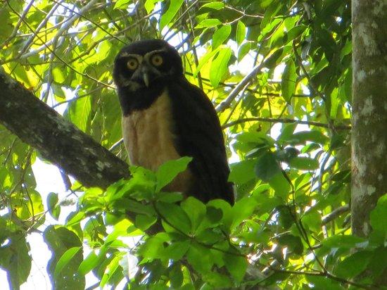 Mystic River Resort: Very Rare Black and White Owl