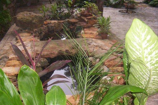Foto de posada el jardin ticul en el jardin heliconea for Posada el jardin