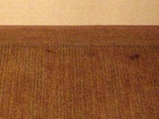 Homewood Suites by Hilton Atlanta - Cumberland / Galleria: Dirty old Carpet
