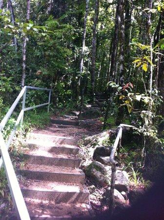 Mossman Gorge Centre Tours: Steps into trail after bridge Mossman Gorge
