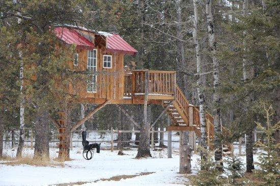 Folk Tree Lodge: Tree House