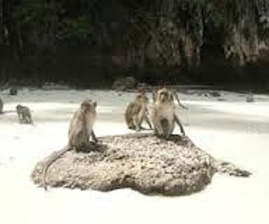 Ciao Residence : Monkey Island