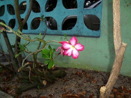 Turquoise Shell Inn: more flowers