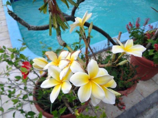 Turquoise Shell Inn : flowers all over