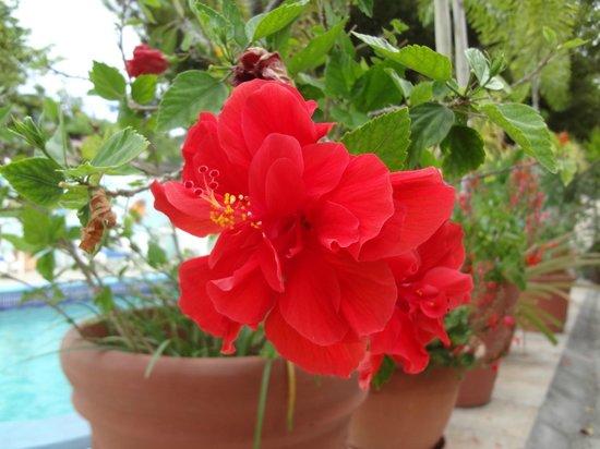 Turquoise Shell Inn: flowers