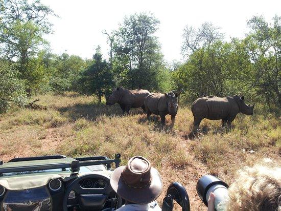 Garonga Safari Camp: Moosa & Tulani tracked them down for us