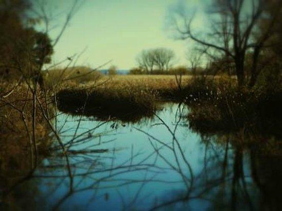 La Locanda al Lago: Veduta della Riserva Naturale