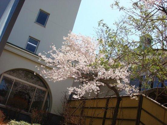 Takato Sakura Hotel : ラウンジ外の桜