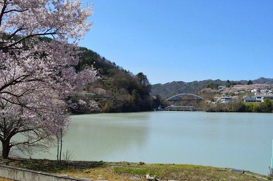 Takato Sakura Hotel : 高遠湖畔の桜