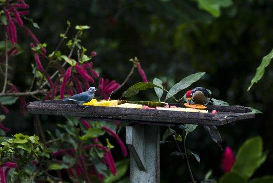 B&B Hotel Sueño Celeste: los pájaros que se acercan al área del comedor