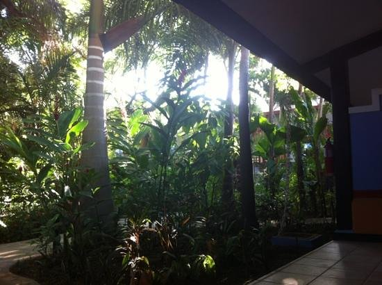 Bahia del Sol Beach Front Boutique Hotel: jungle in backdoor