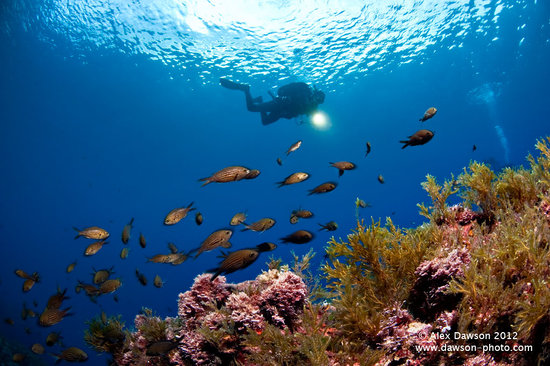 Centro de buceo Big Blue Diving