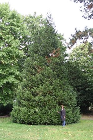 Badisches Landesmuseum: A Giant Tree in the Park
