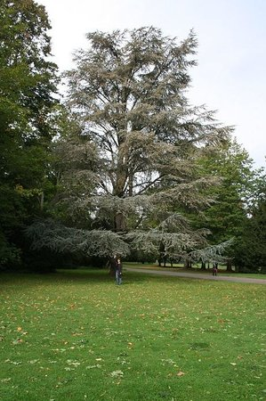 Badisches Landesmuseum: Another Giant Tree in the Park of Schloss Karlsruhe