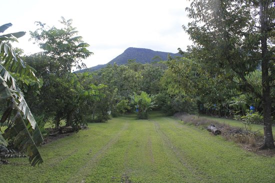 Cape Trib Farmstay B&B: View of Mt.Sorrow from cabin