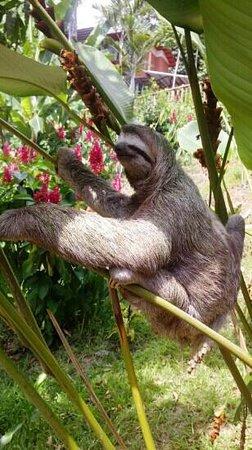 Mar y Selva Ecolodge: Sloth