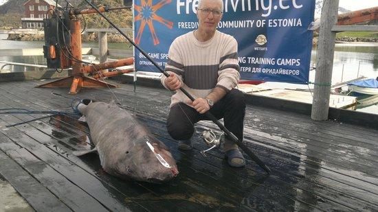 Sandvika Fjord & Sjohus Camping: мой трофей акула 2м75см