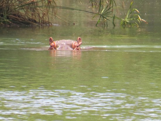 Baobab Beach Resort & Spa: Hippo