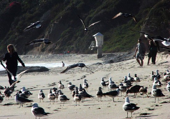 Aliso Beach Park: Flocks of Sea Gulls and Tidal Pools to Explore.