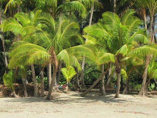 Pacific Bay Resort: South Beach Hammocks