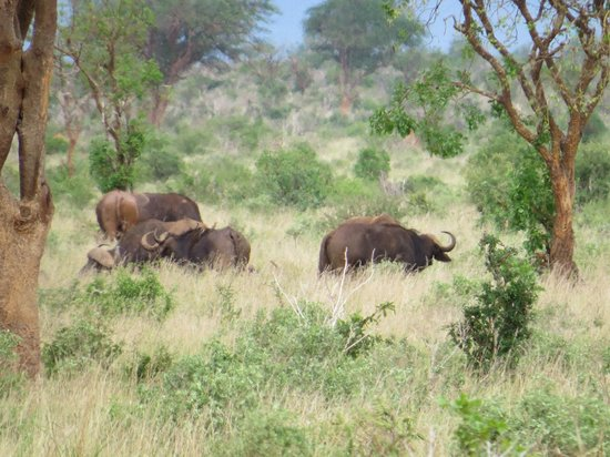 Baobab Beach Resort & Spa: Buffalo