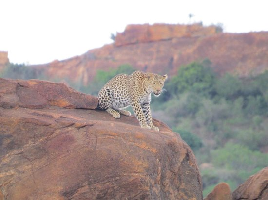 Baobab Beach Resort & Spa: Leopard