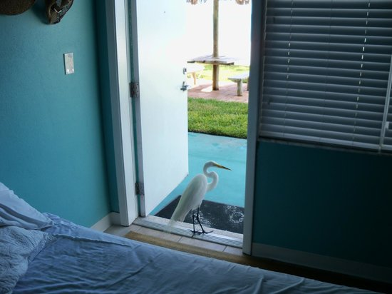 The Diplomat Condominium Beach Resort: An Egret visits