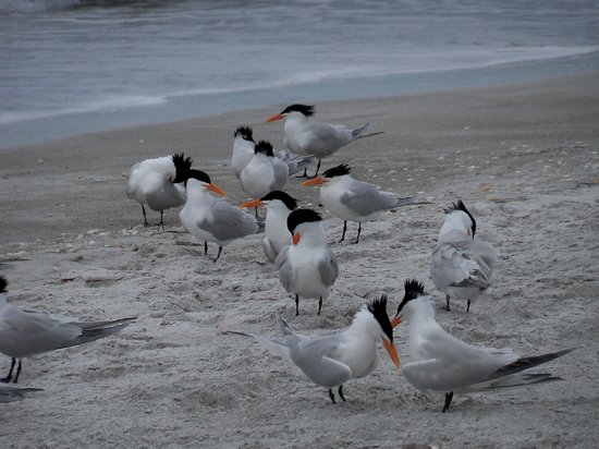 The Diplomat Condominium Beach Resort: More birds