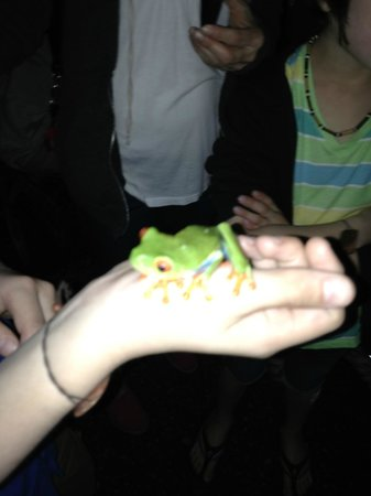 Peace Lodge: Frog