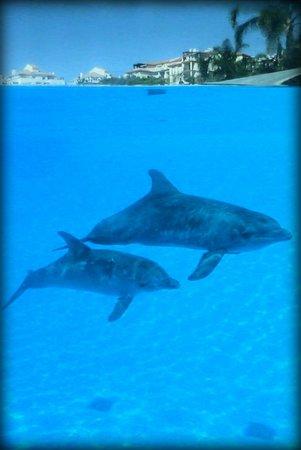 Selwo Marina : mega schöne Anlage für die Delfine