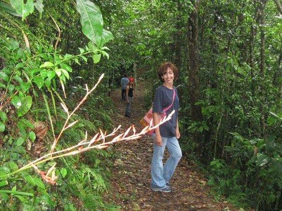 Guajataca Forest Reserve: Hike trail