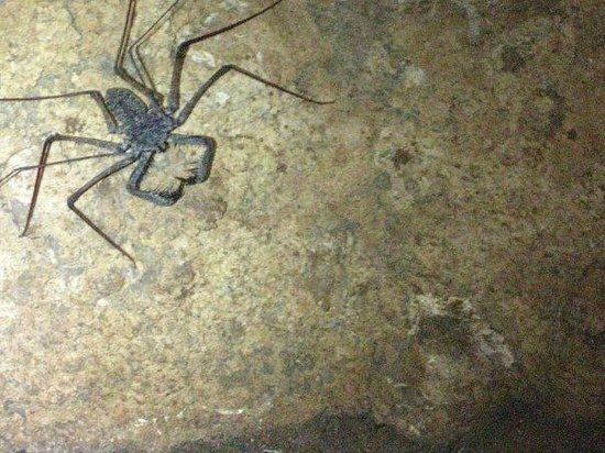 Guajataca Forest Reserve: Sample of living creatures in caverns