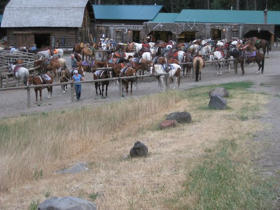 Mountain Sky Guest Ranch: View of the stables.  The horses are well-taken care of...
