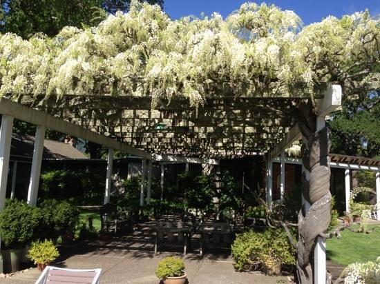 Robert Hunter Winery : wisteria