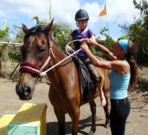 Being with Horses: Veronika showing us the ropes