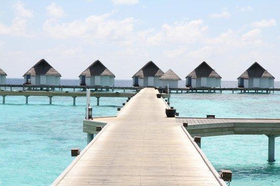 Centara Grand Island Resort & Spa Maldives: ...