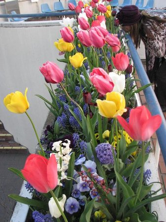 Kyoto Municipal Science Center For Youth : beautiful tulips